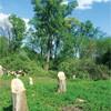 У Борисполі знищують ще одну зелену зону