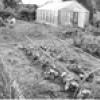 Садові роботи в червні
