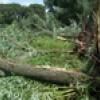 У Борисполі знищується ще одна зелена зона