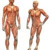Міфи про людське тіло